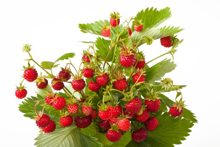 Wild Strawberry e-Liquid by Pulp